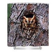 Reddish Screech Owl Shower Curtain
