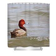 Redhead Duck Shower Curtain