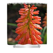 Redhot Popsicle Shower Curtain