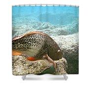 Redlip Parrotfish Shower Curtain