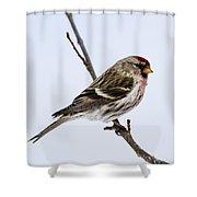 Redoll Shower Curtain