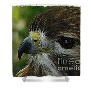 Redtail Hawk Shower Curtain