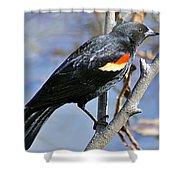 Redwinged Blackbird I Shower Curtain