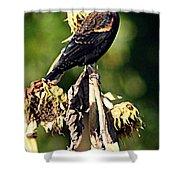 Redwinged Blackbird II Shower Curtain
