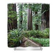 Redwood National Park, California Shower Curtain