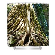 Redwood Trees Forest Art Prints Redwoods Shower Curtain