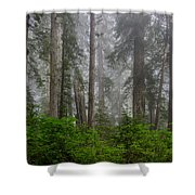 Redwoods In Breaking Mists Shower Curtain