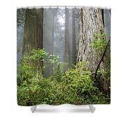 Redwoods In May Shower Curtain