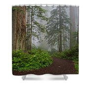 Redwoods Rising In Fog Shower Curtain