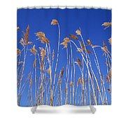 Reed Grass Shower Curtain