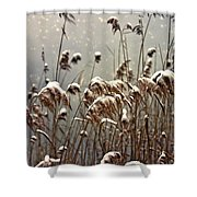 Reed In Snow Shower Curtain by Joana Kruse