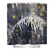 Reed With Frost And And Color Shower Curtain