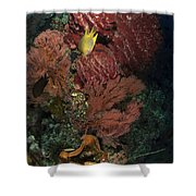Reef Sponge Coral And Yellow Fish Shower Curtain
