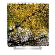 Reflecting Autumn Tree Shower Curtain