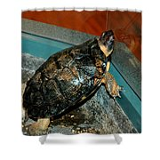 Reflecting Turtle Shower Curtain