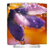 Reflection Of Flower In Dew Drops Shower Curtain
