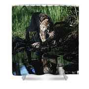 Reflection Of Lynx In Stream Idaho, Usa Shower Curtain