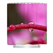 Reflections In Raindrops, Forbidden Shower Curtain by Robert Postma