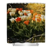 Window Reflections Shower Curtain