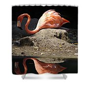 Reflections Of A Flamingo Shower Curtain