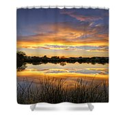 Reflections Of Gold  Shower Curtain