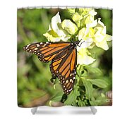 Monarch Butterfly Feeding On A Cluster Of Yellow Flowers Shower Curtain