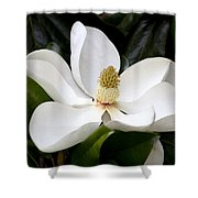 Regal Southern Magnolia Blossom Shower Curtain