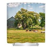 Reive Blvd Barn 15059c Shower Curtain