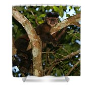 Relaxed - Brown Capuchin Shower Curtain
