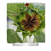 Reluctant To Bloom Shower Curtain