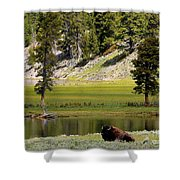 Resting Buffalo By Pond Shower Curtain