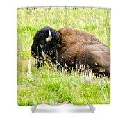 Resting Buffalo Shower Curtain