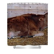 Resting Calf Shower Curtain