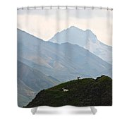 Resting Dall Sheep Shower Curtain