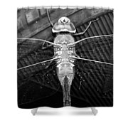 Resting Dragon Shower Curtain