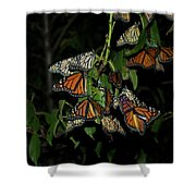 Resting Monarchs Shower Curtain
