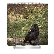 Resting Silver-back Shower Curtain