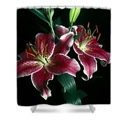 Reuben Lillies Shower Curtain
