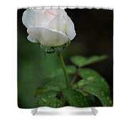 Reverence And Humility Shower Curtain