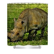 Rhinoceros 101 Shower Curtain