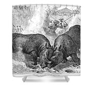 Rhinoceros Fight, 1875 Shower Curtain