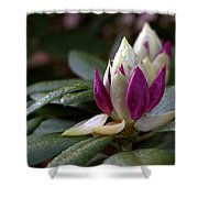Rhododendron Flower Bud Shower Curtain
