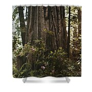 Rhododendrons Bloom Around The Trunk Shower Curtain