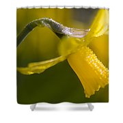 Rhododendrons, Close-up Shower Curtain