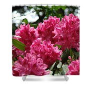 Rhododendrons Garden Art Prints Pink Rhodies Floral Shower Curtain by Baslee Troutman