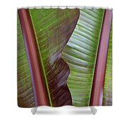 Ribbed Shower Curtain
