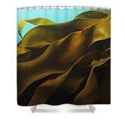 Ribbon Kelp Durvillaea Antarctica Shower Curtain