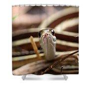 Ribbon Snake Shower Curtain