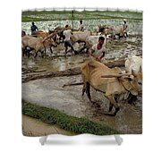 Rice Cultivation Shower Curtain