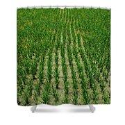 Rice Field Shower Curtain